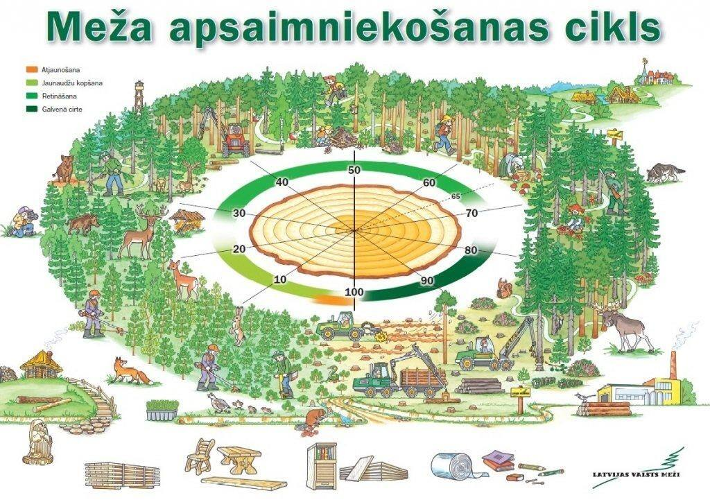 Forest management cycle
